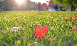 gazon herfst