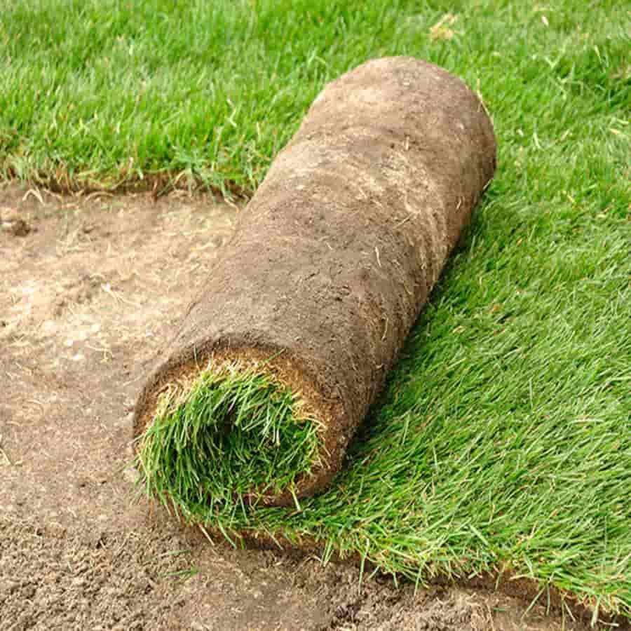 nieuw gras maaien